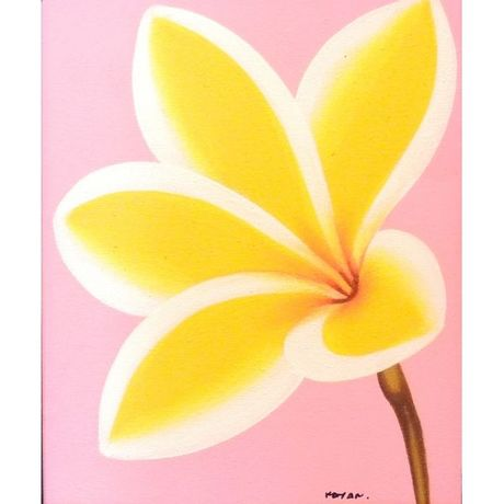Yellow Plumeria on Pink