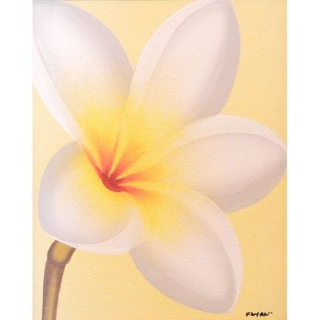 White Plumeria on Yellow