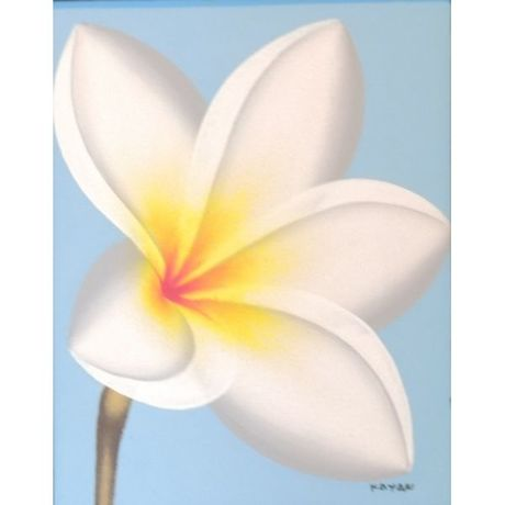 White Plumeria on Sky Blue