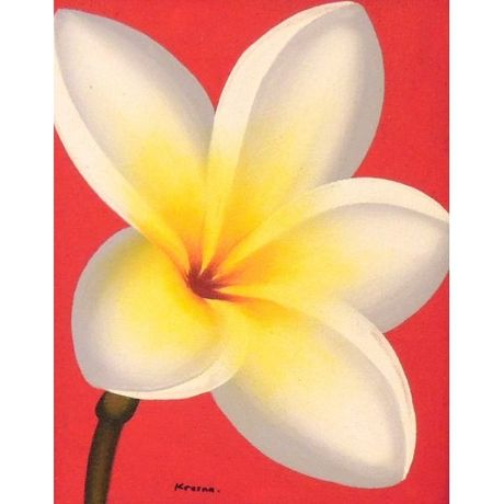 White Plumeria on Red