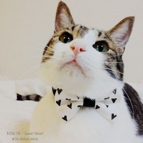 BOW TIE / Sweet Heart(White & Black)
