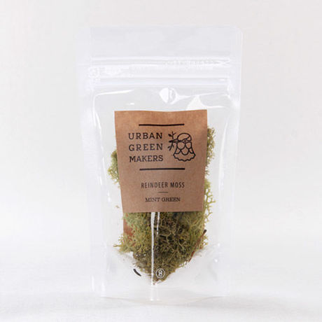 REINDEER MOSS(URBAN GREEN MAKERS)