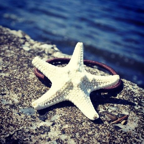 51 starfish hair accessory